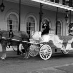 """New Orleans Horse Drawn Carriage Takin"