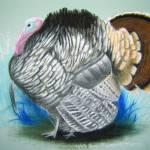 """""""Turkey"""" by saraalexandermunoz"""