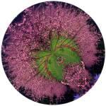 """""""BlossomCurl 4"""" by NickMeers"""