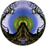 """""""TreeSea 2"""" by NickMeers"""
