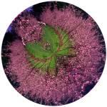 """""""BlossomCurl 3"""" by NickMeers"""