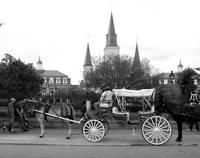 Carriages aplenty in New Orleans