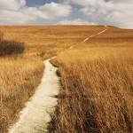 """Prairie Pathway"" by Tanasi"