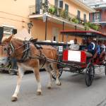 """mule or horse drawn carriage in New Orleans"" by ShutterbugCentral"