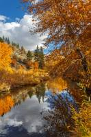 Susan River Autumn Reflections