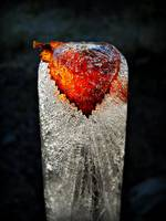 Birch Leaf In Ice 1