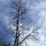 """Tree"" by Tallulah"