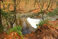 Stepping Stones, Tollymore Forest Park