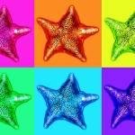"""Starfish Six"" by wingsdomain"