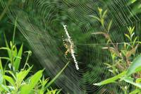 Spider web beauty