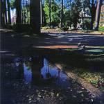 """Palmtrees Reflection"" by anasampaio"