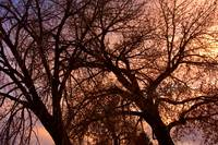 Branching Out at Sunset