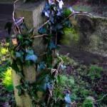 """Irish Fence Post"" by JannArtPhotography"