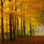 """""""AutumnPath"""" by janelkaufman"""