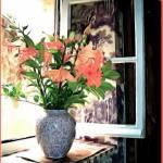 """""""Simple window in St Emillion"""" by jbjoani2"""