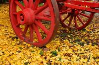 Leaves and Wagon Wheel