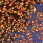 """Leaves - San Francisco"" by jimmy-joe"