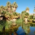 """Desert Oasis"" by lowellaguno"