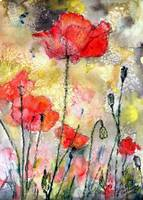 Red Poppy Watercolor & Ink by Ginette