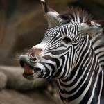 """San Diego Zoo"" by jjbuchan"