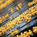 """""""Duck Race"""" by jjbuchan"""