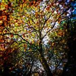 """Tree In Fall"" by johnburnett"
