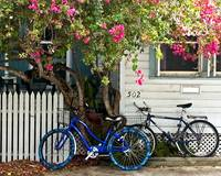 House bougainvillea and bicycles