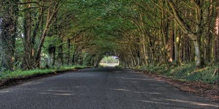 The Tree Tunnel
