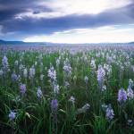 """Camas Marsh"" by LelandHoward"