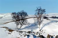 Glen Esk Winter 2