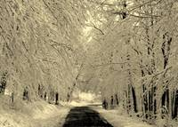 Snowy Country Road