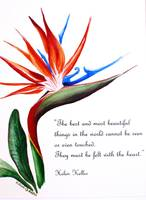 Bird of Paradise  poem