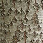 """tree bark"" by KurtThorson"