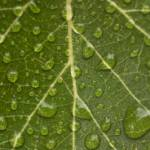 """water drops on a leaf"" by KurtThorson"