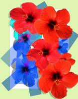 Collage from red and dark blue florets