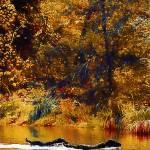 """""""water runners1"""" by Sheeztrue"""