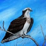 """""""Osprey"""" by revelation_art_studio"""
