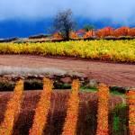 """Otoño en La Rioja II  // Autum at La Rioja II"" by pasotraspaso"