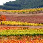 """Otoño en La Rioja // Autumn in La Rioja"" by pasotraspaso"