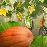 """""""Gourds of Gratitude"""" by spadecaller"""