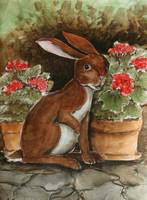 Rabbit with Geraniums