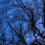 """""""Peek-A-Boo Moon"""" by PatriciaHeise"""