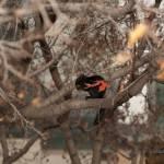 """""""Black Squirrel"""" by BrHoOoM"""