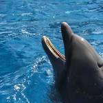"""Dolphin"" by Juany"