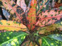 colorful plant leaves