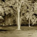 """""""Glade of Trees: Abstract"""" by FinneganPhotos"""