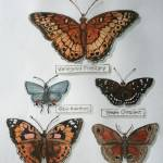 """""""Butterfly collection 2"""" by revelation_art_studio"""