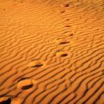 """""""Footprints"""" by jimmy-joe"""