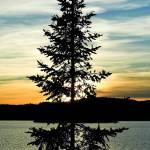 """""""Tree at sunset"""" by jimmy-joe"""