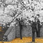 """""""Autumn leaves"""" by jimmy-joe"""